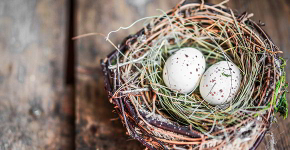 Play Therapy in Montgomery, AL - bird's nest with eggs